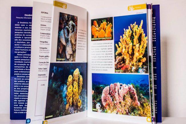 A vida marinha no litoral sul potiguar